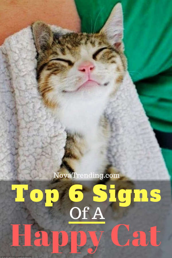 Top 6 Signs That Show Your Cat Is Happy Happy cat, Cats