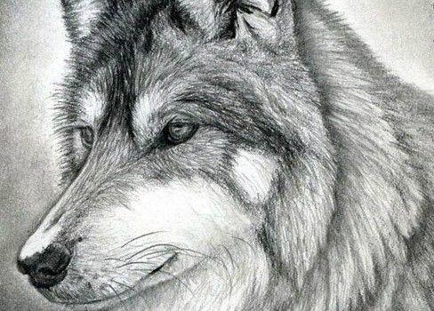 wolf zeichnen bleistiftzeichnen zeichnungen pinterest wolf malen wolf. Black Bedroom Furniture Sets. Home Design Ideas