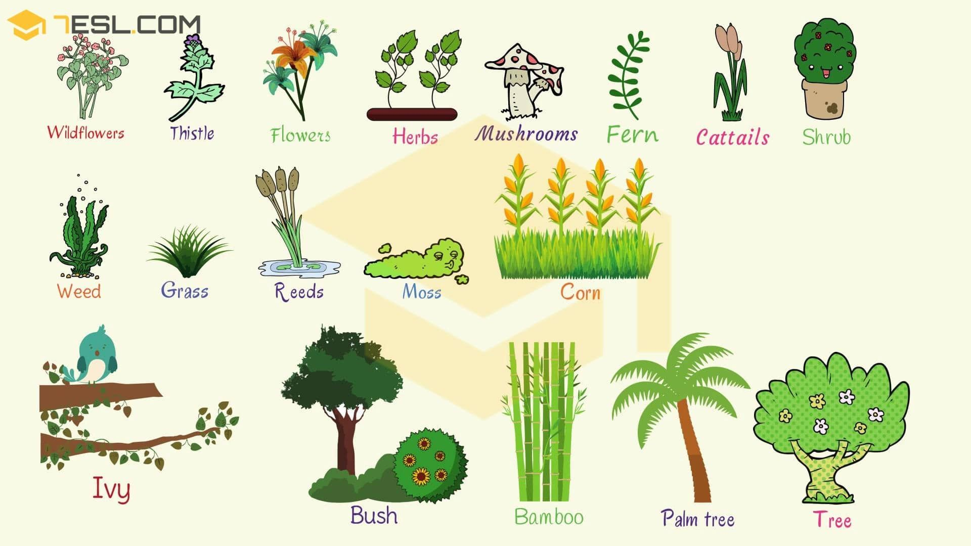 Plant Names List of Common Types of Plants and Trees 7