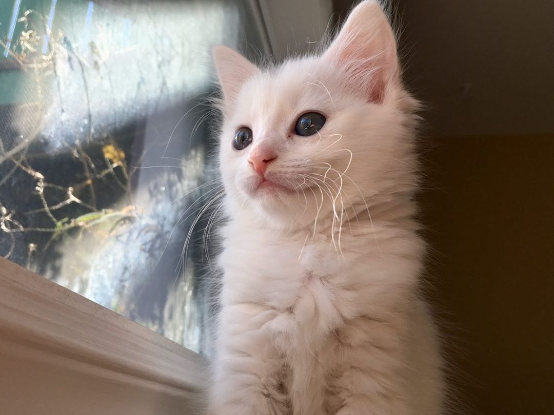 Cats Instagram Related Hashtags Kitten Rescue Cat Post Cat Rescue