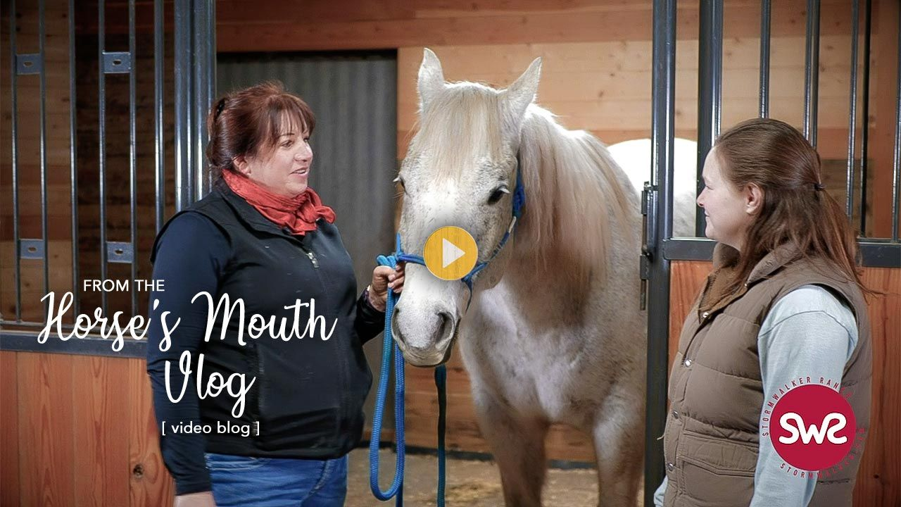 Deworming in 2020 harvest festival horses vlogging