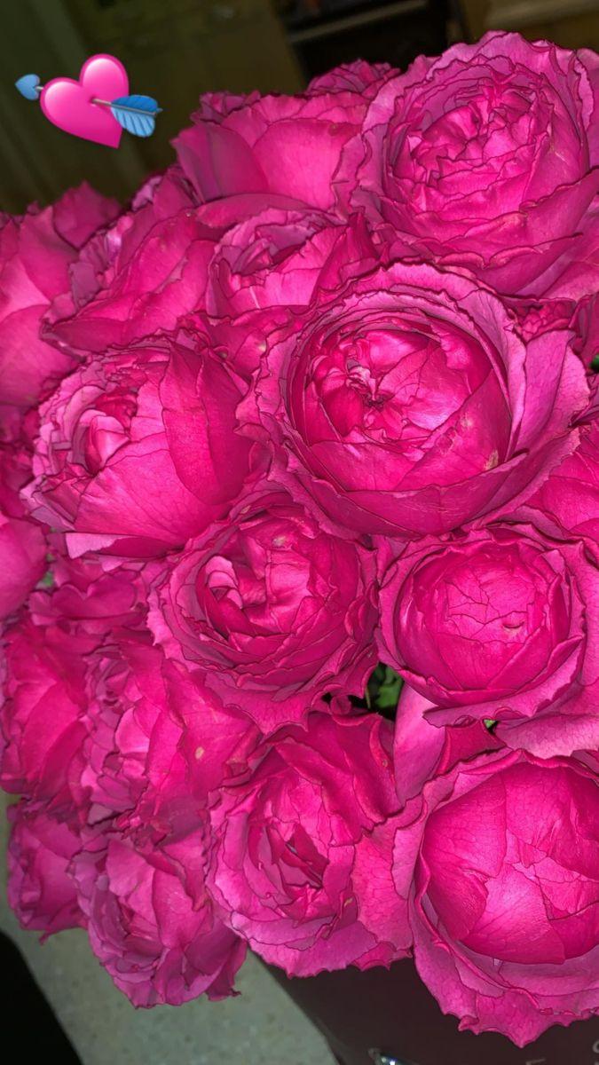 Обои вектор, лейка, Коллаж, цветы. Разное foto 14