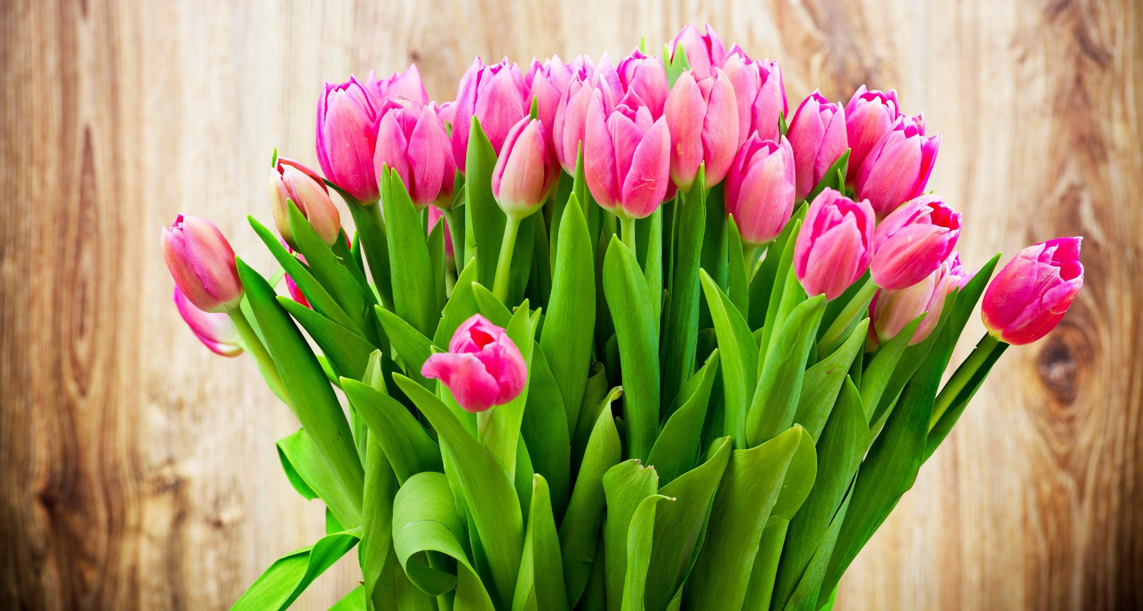 Wondering Which Is The Best Place To Get Tulips Flowers Online Just Go To Www Wholeblossoms Com And You Will Get An Tulips In Vase Tulips Flowers Pink Tulips