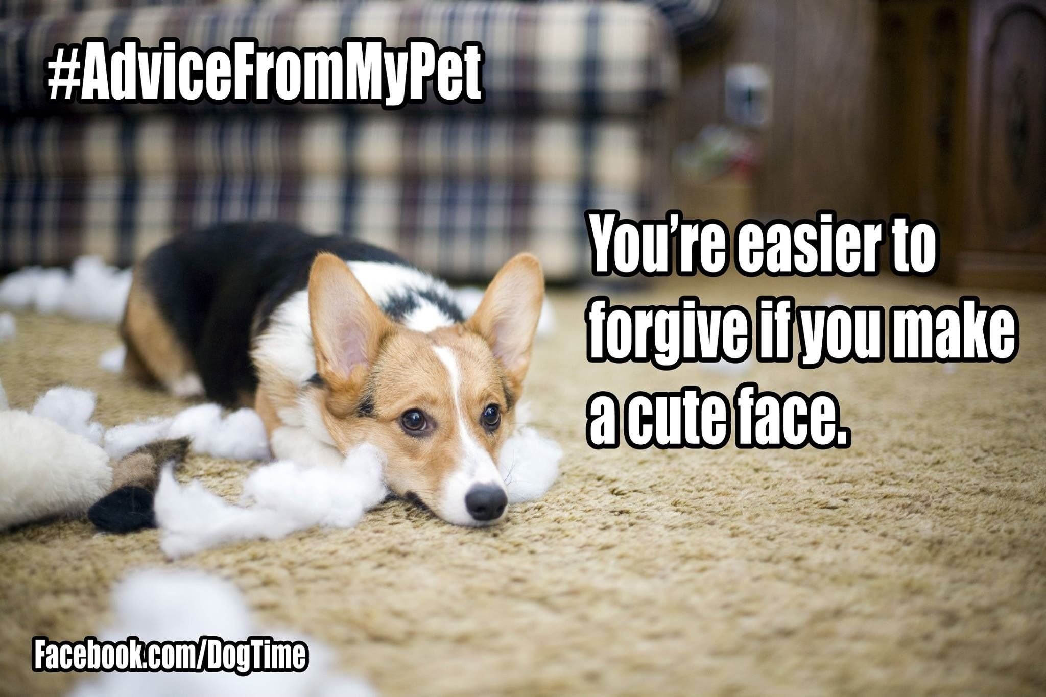 Read these Funny Dog Memes pure humor hilarious
