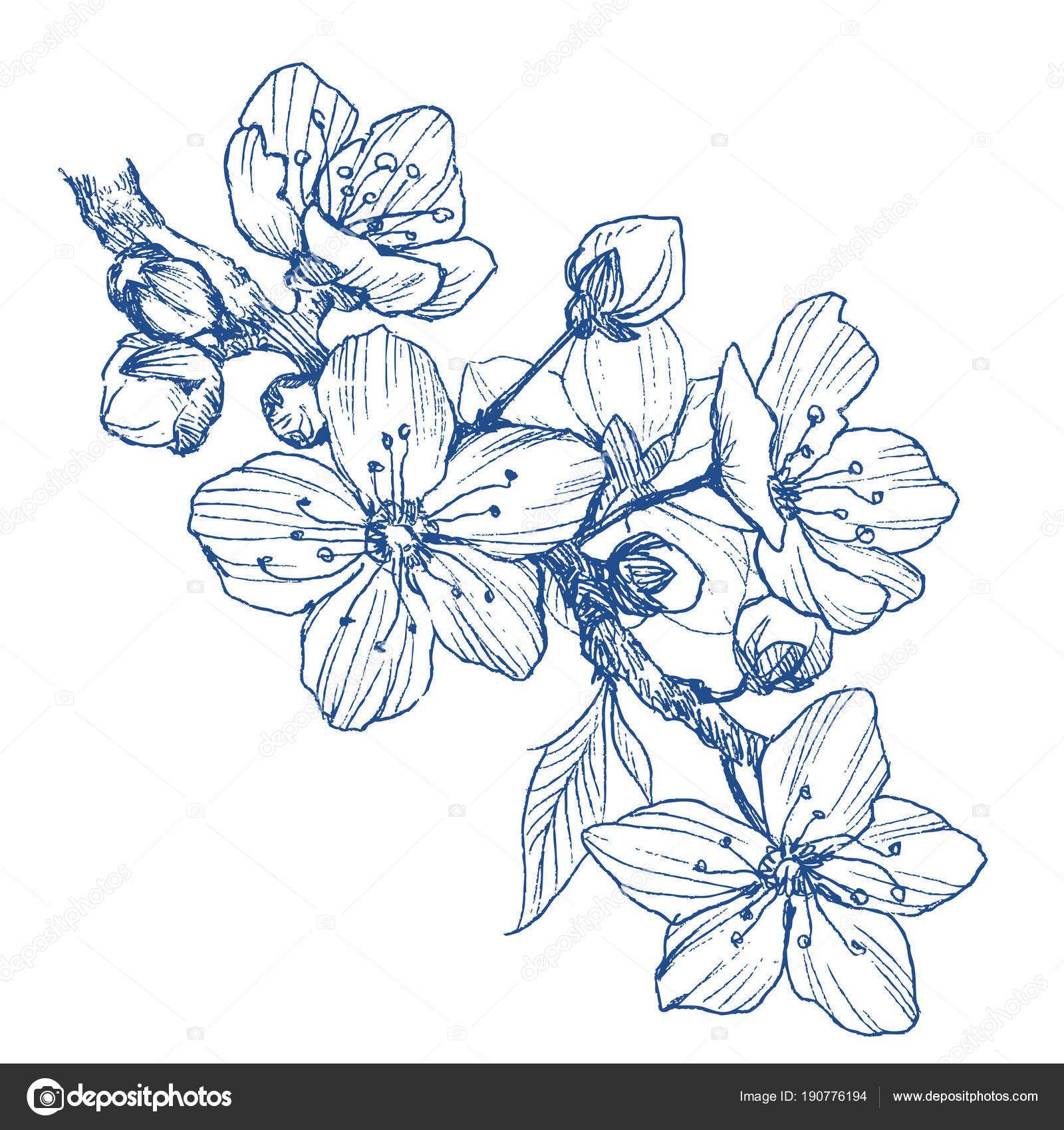 Resultado De Imagen Para Flor De Almendro Flor De Cerezo Dibujo Arte De Flor De Cerezo Pinturas Florales