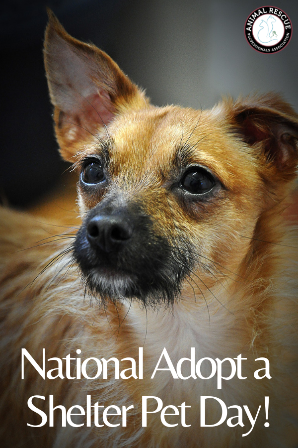 National Adopt a Shelter Pet Day, Bring Home a FourLegged
