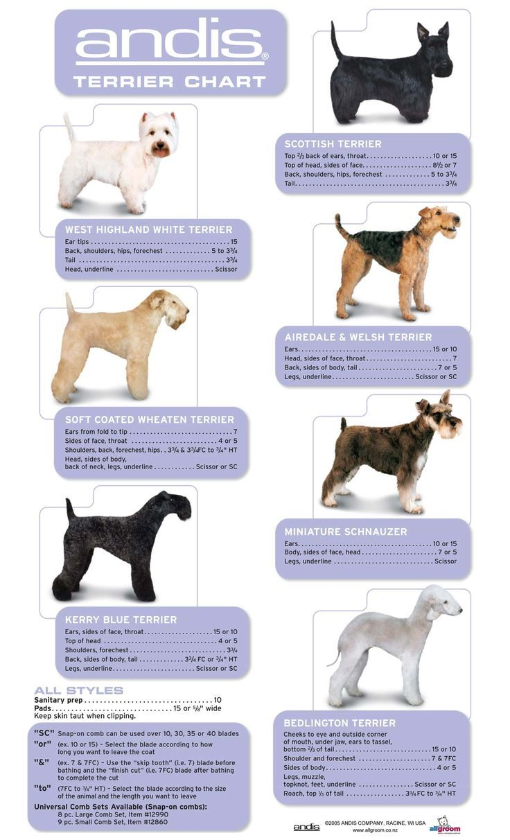 Grooming Guide Page 2 All Groom Dog Grooming Clippers Dog