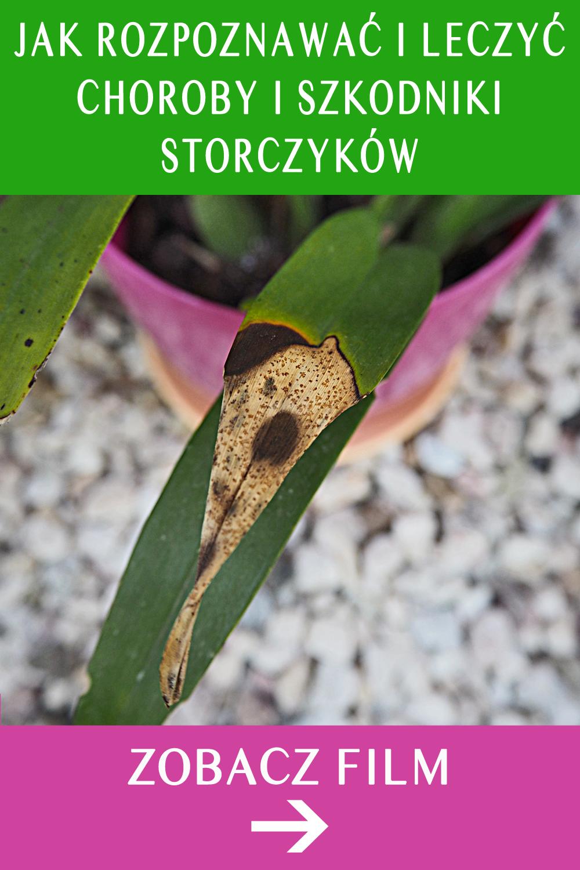 Choroby Storczykow Szkodniki Jak Rozpoznawac Leczyc I Zapobiegac Moth