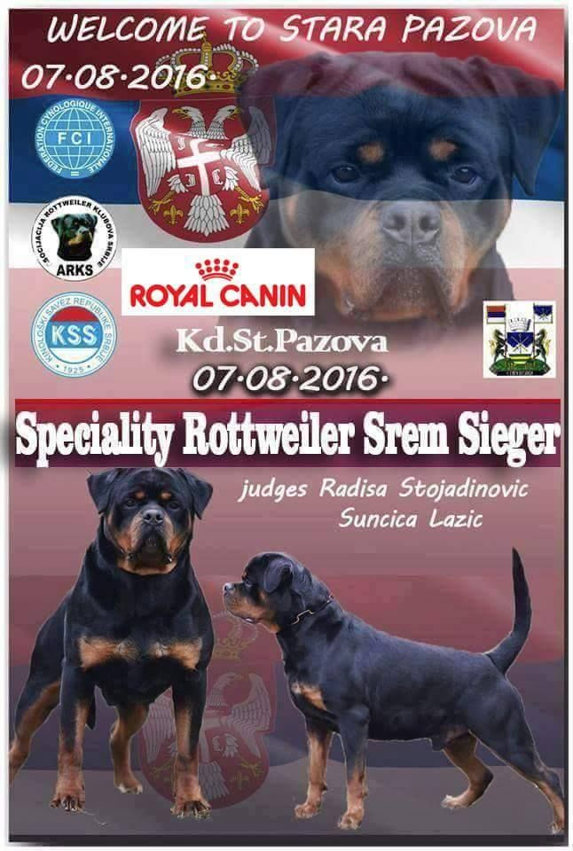 The Cover Page Of The Web Portal Jelena Dog Shows Specialty