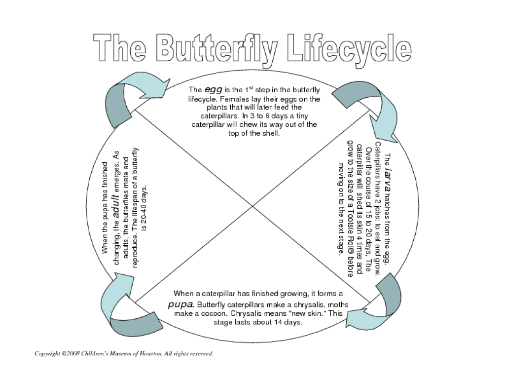 Life Cycle Of A Butterfly Lesson Plan For 2nd