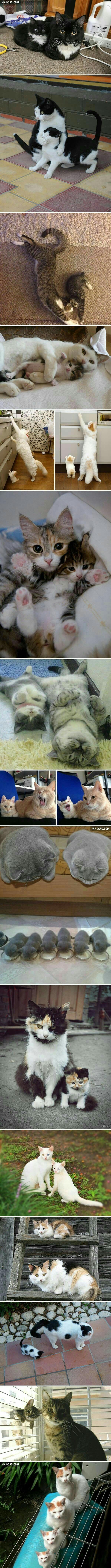 Cats & their mini-me kittens.