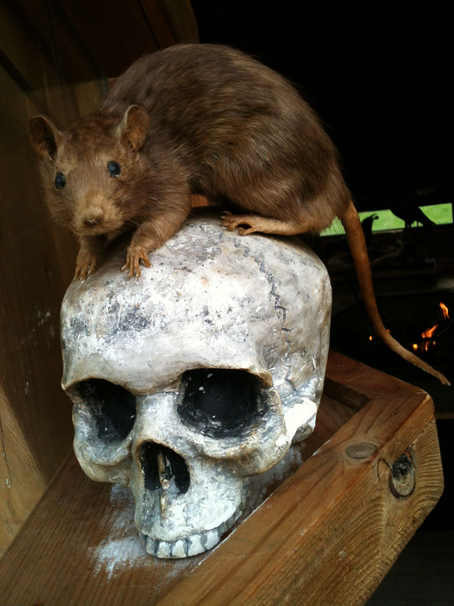 Alnwick Poison Garden 3 | Pretty Horror Show | Pinterest