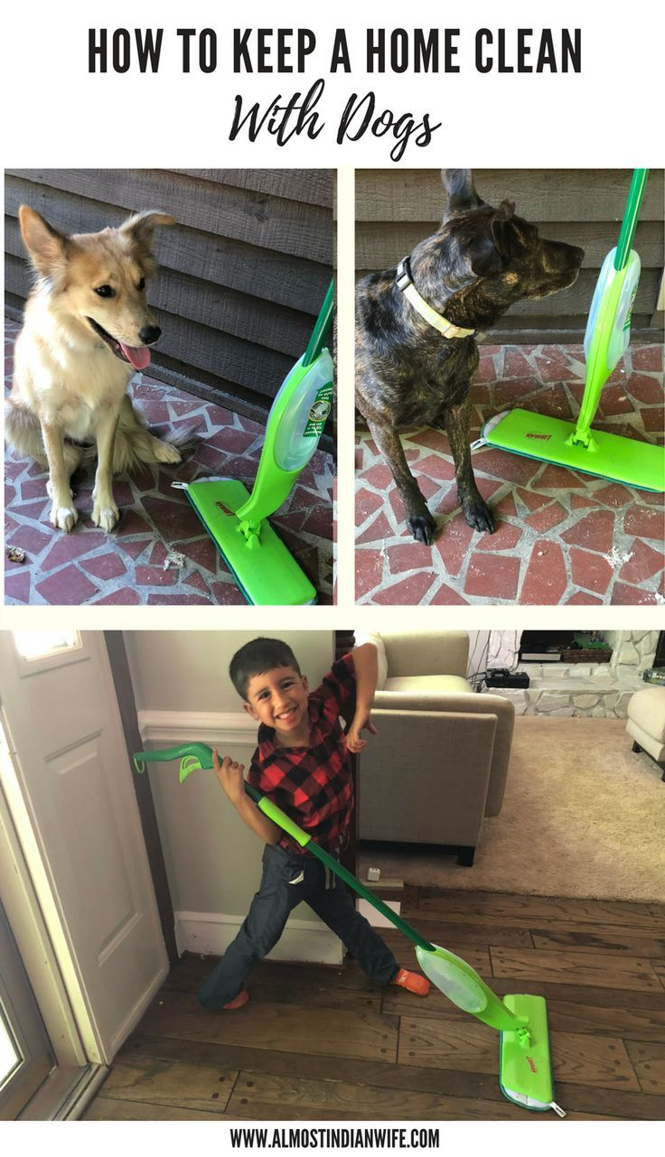 10 Ways To Keep Your Home Clean With Dogs in 2020 (With