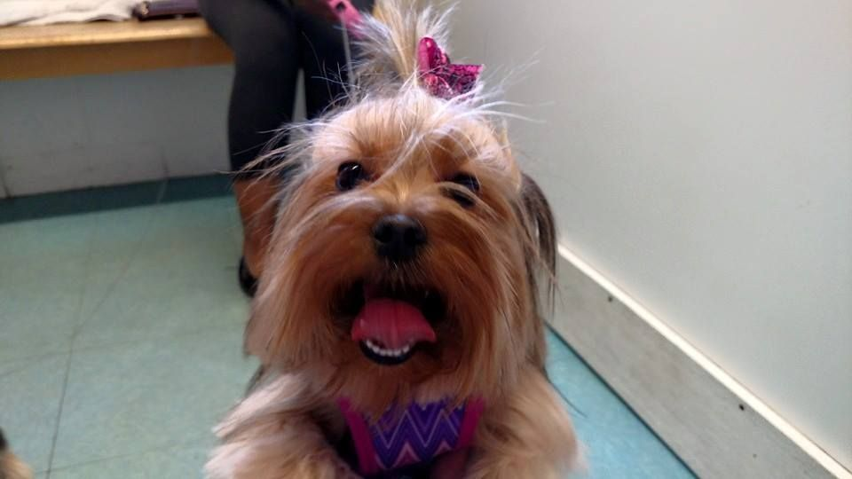 Pin By Brians Kennels On Dog Grooming Boston Dog Grooming Cat