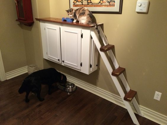 Cat Ledge That I Built To Keep The Dogs From Eating Their Food And To Prevent The Cats From Cat Food Station Cat Feeding Station Dog Proof Pet Feeding Station