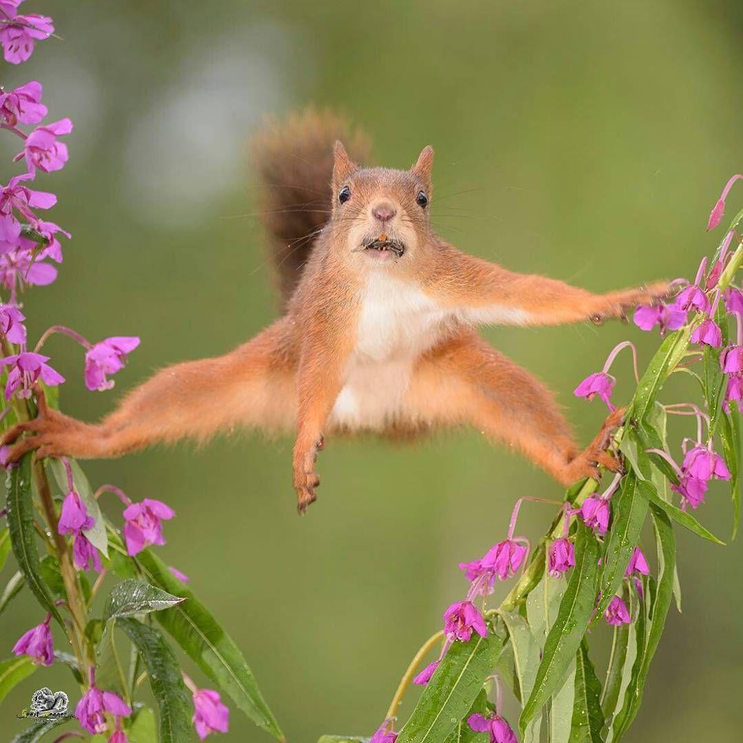 ranking photographer naturephotography