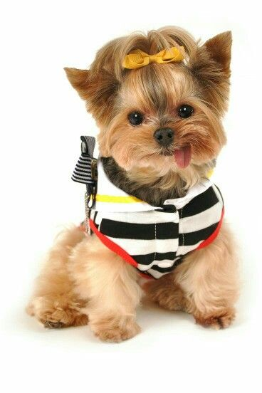 All harnesses are on sale today!! Use 25% at checkout ❤ www ...