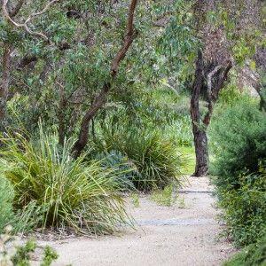 Woodleigh School   Australian native garden, Australian ...