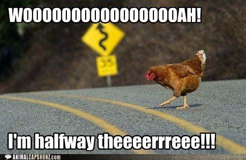 Funny Meme Bon Jovi : Why did the chicken cross road bon jovi things