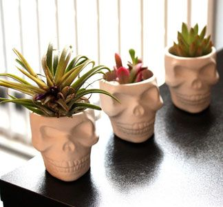 I can't exactly explain it but for some reason I really, really like these skull planters...  Maybe it's because I have a knack for killing plants.