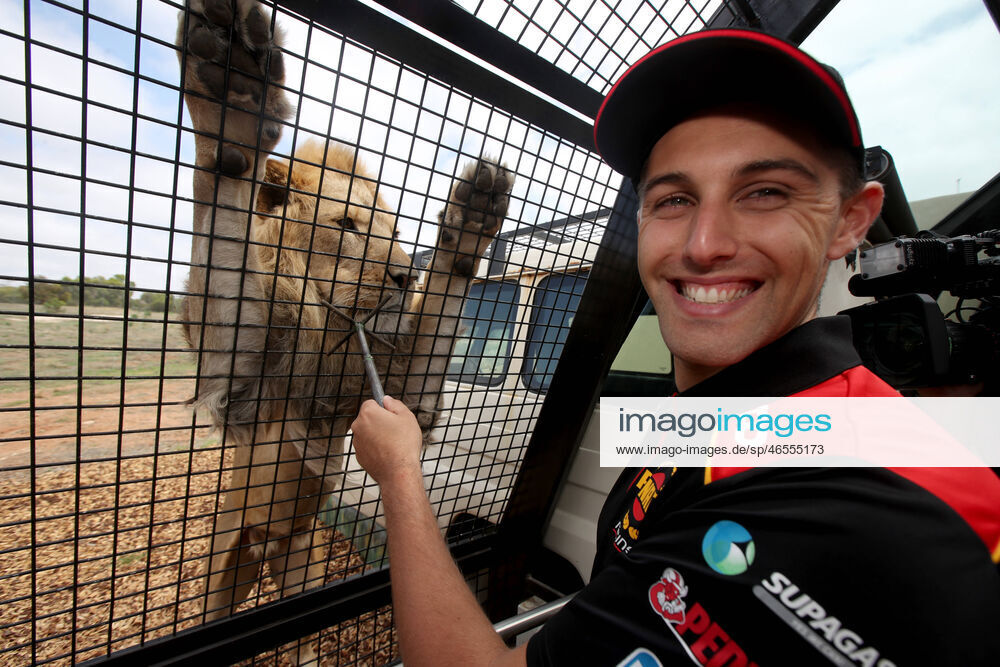 SUPERCARS WHINCUP DE PASQUALE PREVIEW, Supercar driver Anton De Pasquale interacts with the Lions at the Monarto Zoo during a media preview of the Superloop Adelaide 500 in Adelaide +++ imago images / AAP / Kelly Barnes