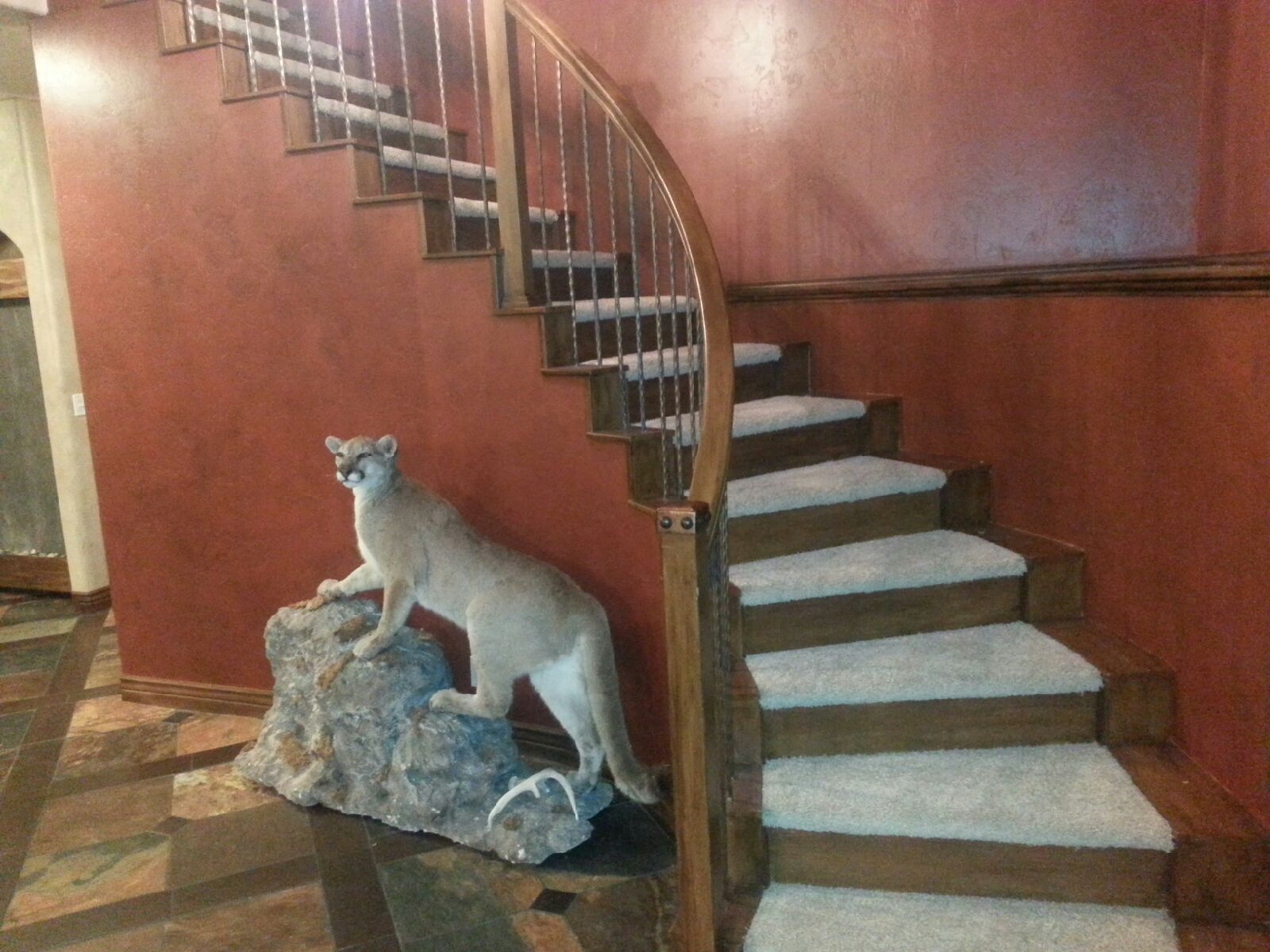 Stainmaster Pet Protect Carpet Affordable carpet, Carpet