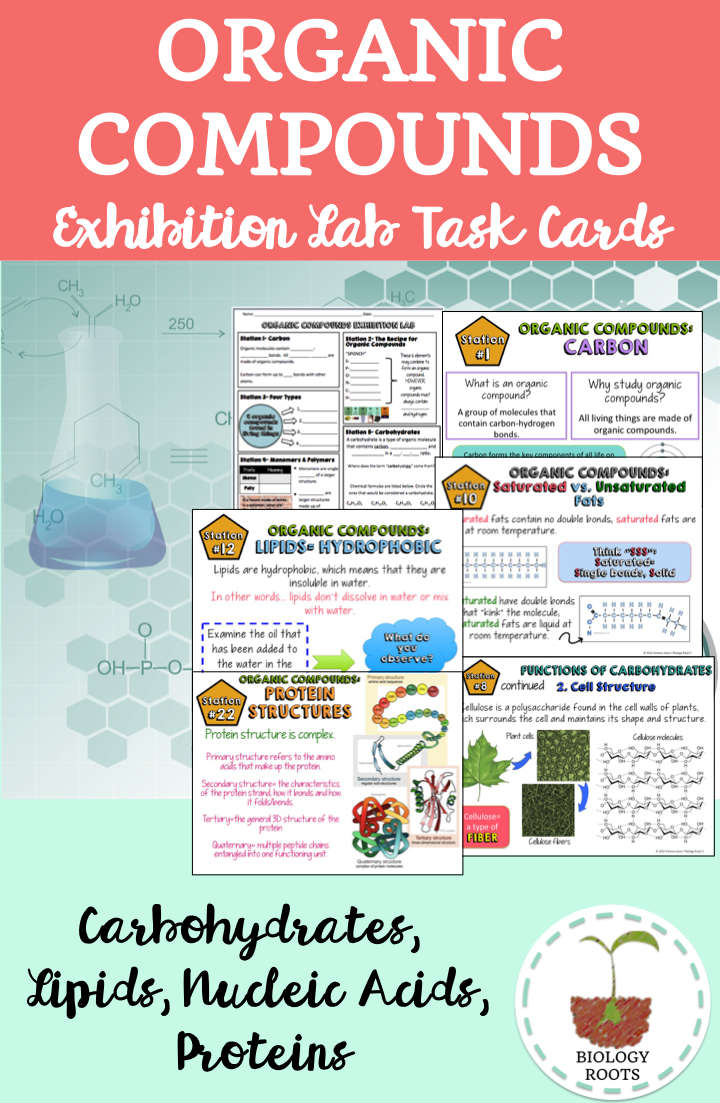 Organic Compounds Exhibition Station Task Cards- Macromolecules