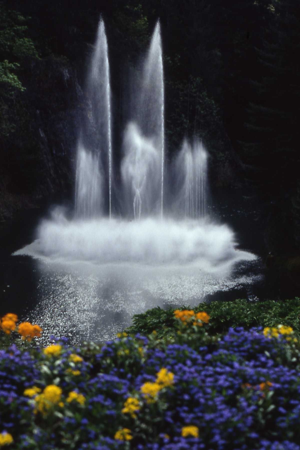 Butchart Gardens BC (With images) Butchart gardens