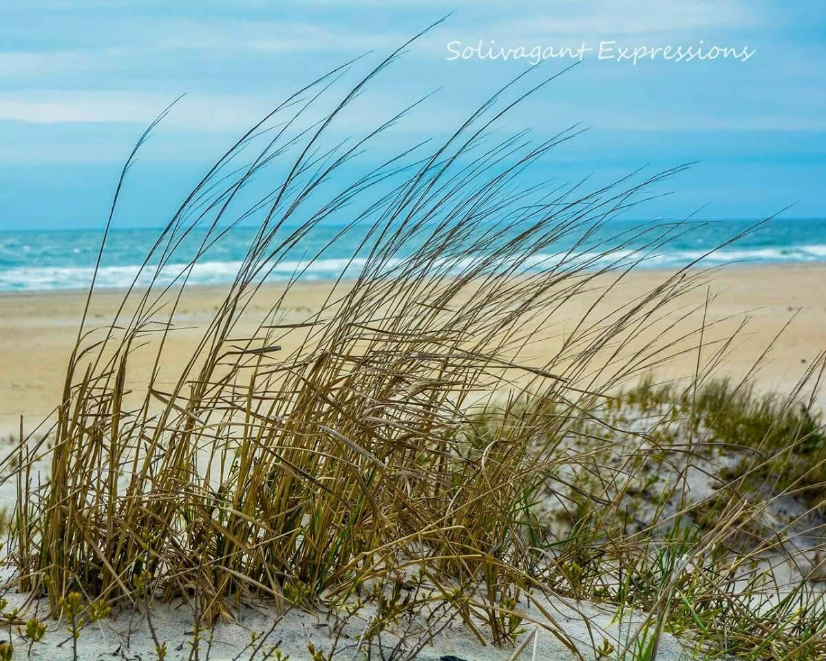Dune Grass Canvas Fine Art Decor Beach Landscape Photography 11x14 By Daniellebrownphoto On Etsy Beach Beach Grass Landscape