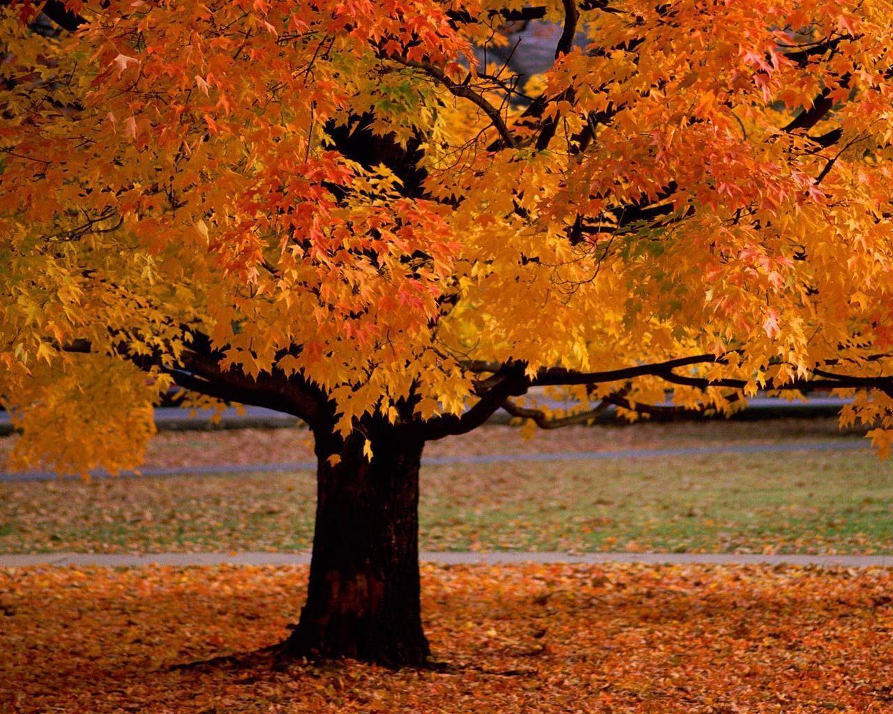 I wish I could live in a world where all the tress are this color