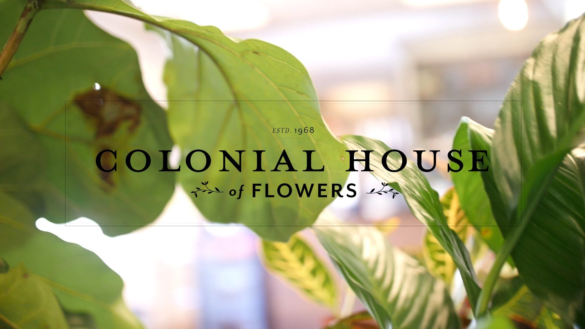 Colonial House Flowers Promo Video