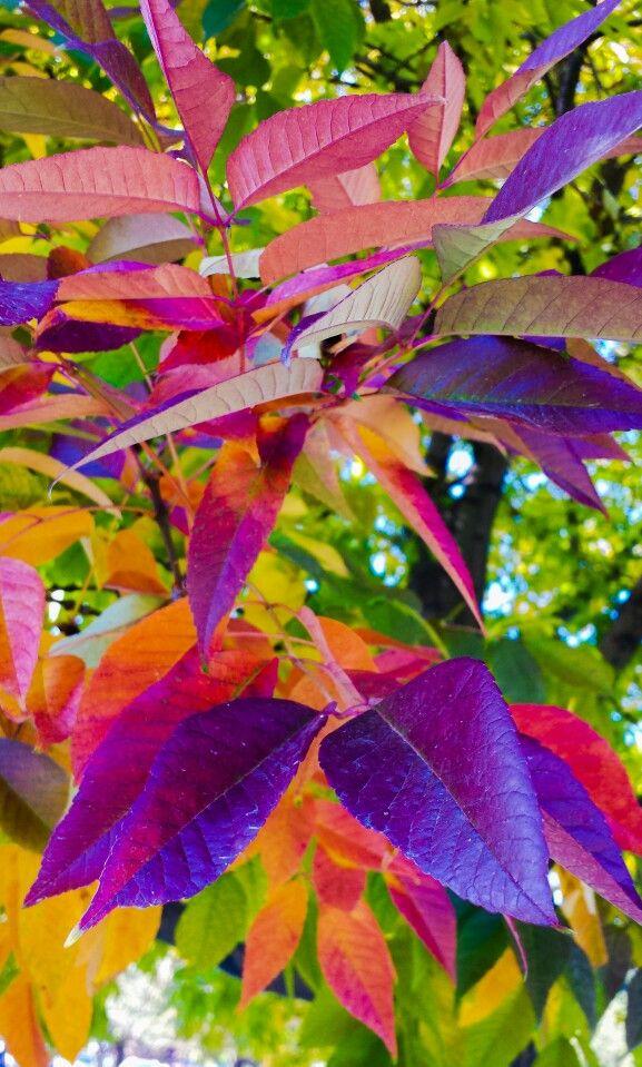 Colorful Fall Bellissimi Sfondi Paesaggio Autunnale Paesaggi