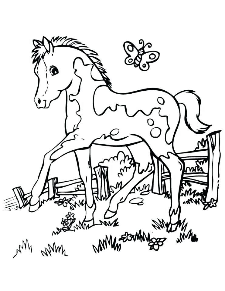 Baby Horse Coloring Page - Youngandtae.com Horse Coloring Pages, Cartoon Coloring  Pages, Free Printable Coloring Pages