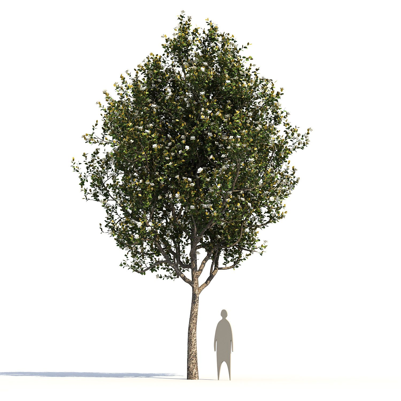 Max 5 Tree Model Tree Tree Landscape Materials