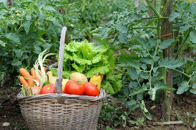 quoi faire au jardin et au potager en septembre avec youpijobcom jobbing - Quoi Faire Au Jardin