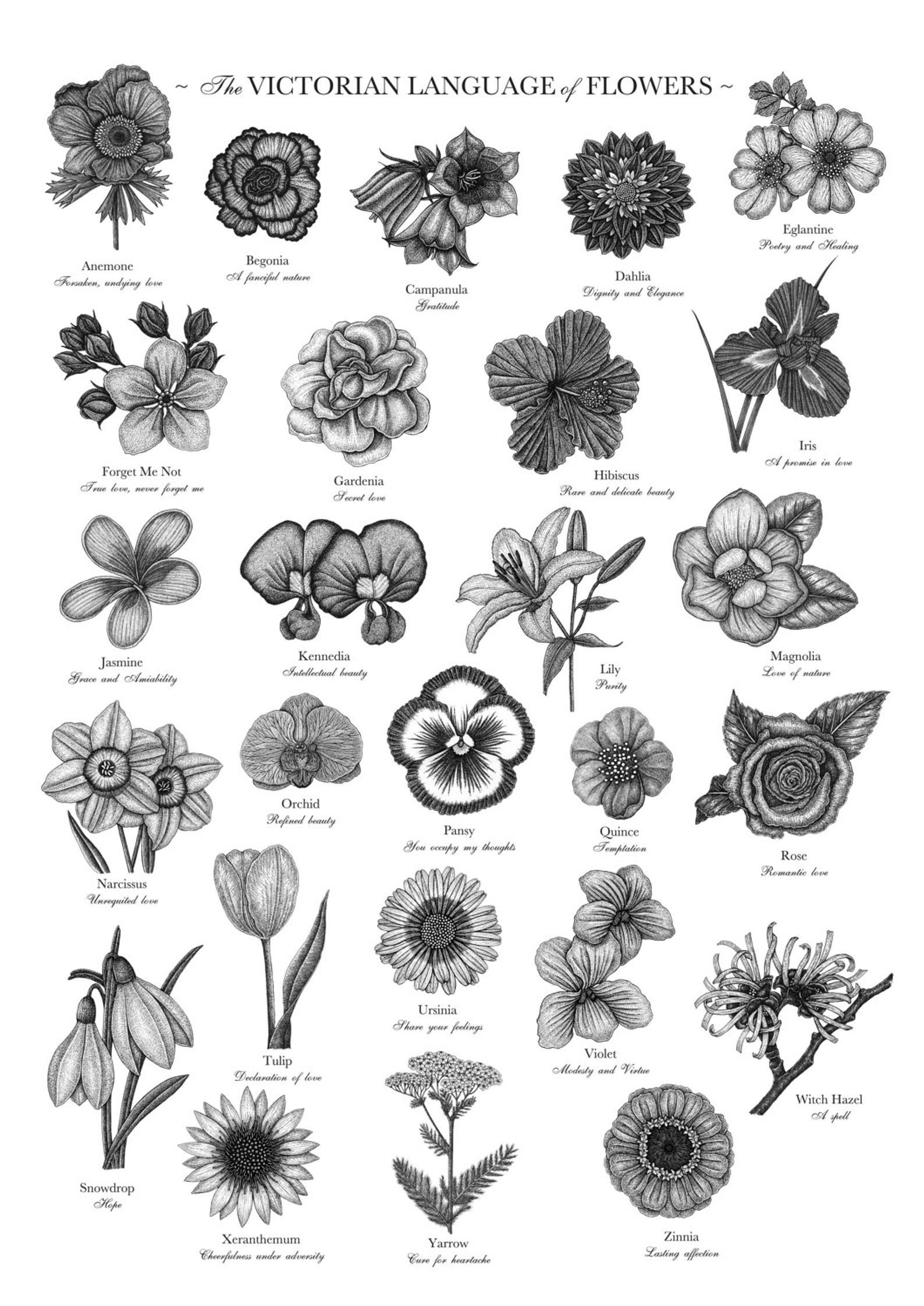 Victorian Language Of Flowers Print A To Z Of Flowers Etsy In 2020 Birth Flower Tattoos Flower Alphabet Victorian Flowers