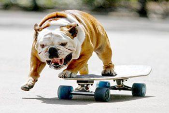 Image detail for -Top 10 Stupid Pet Tricks