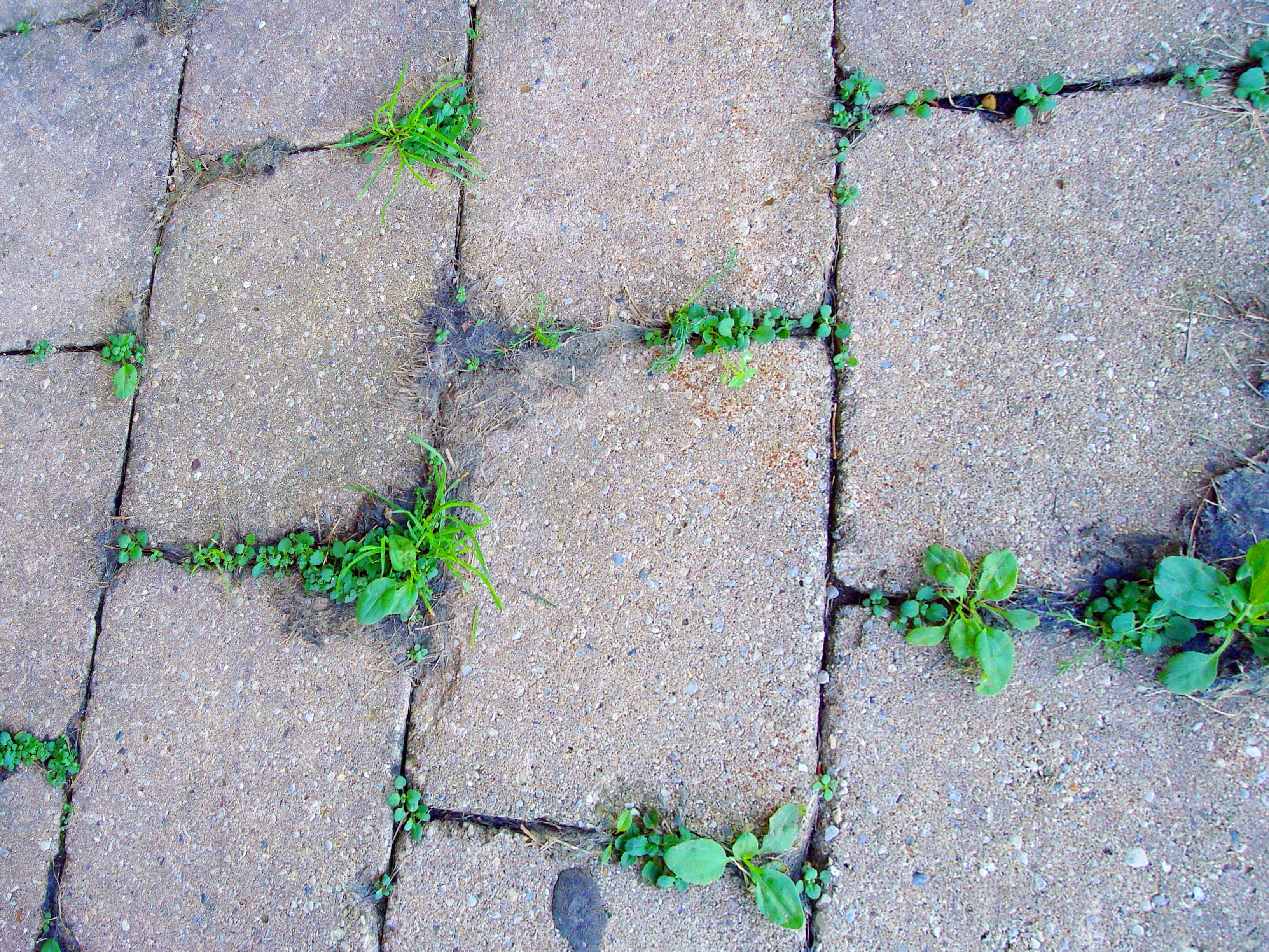 How to plant ground cover between pavers - How To Keep Weeds From Growing Between Pavers