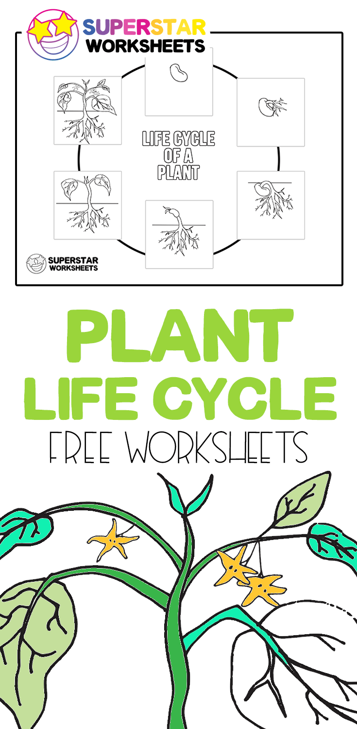 Plant Life Cycle Worksheets in 2020