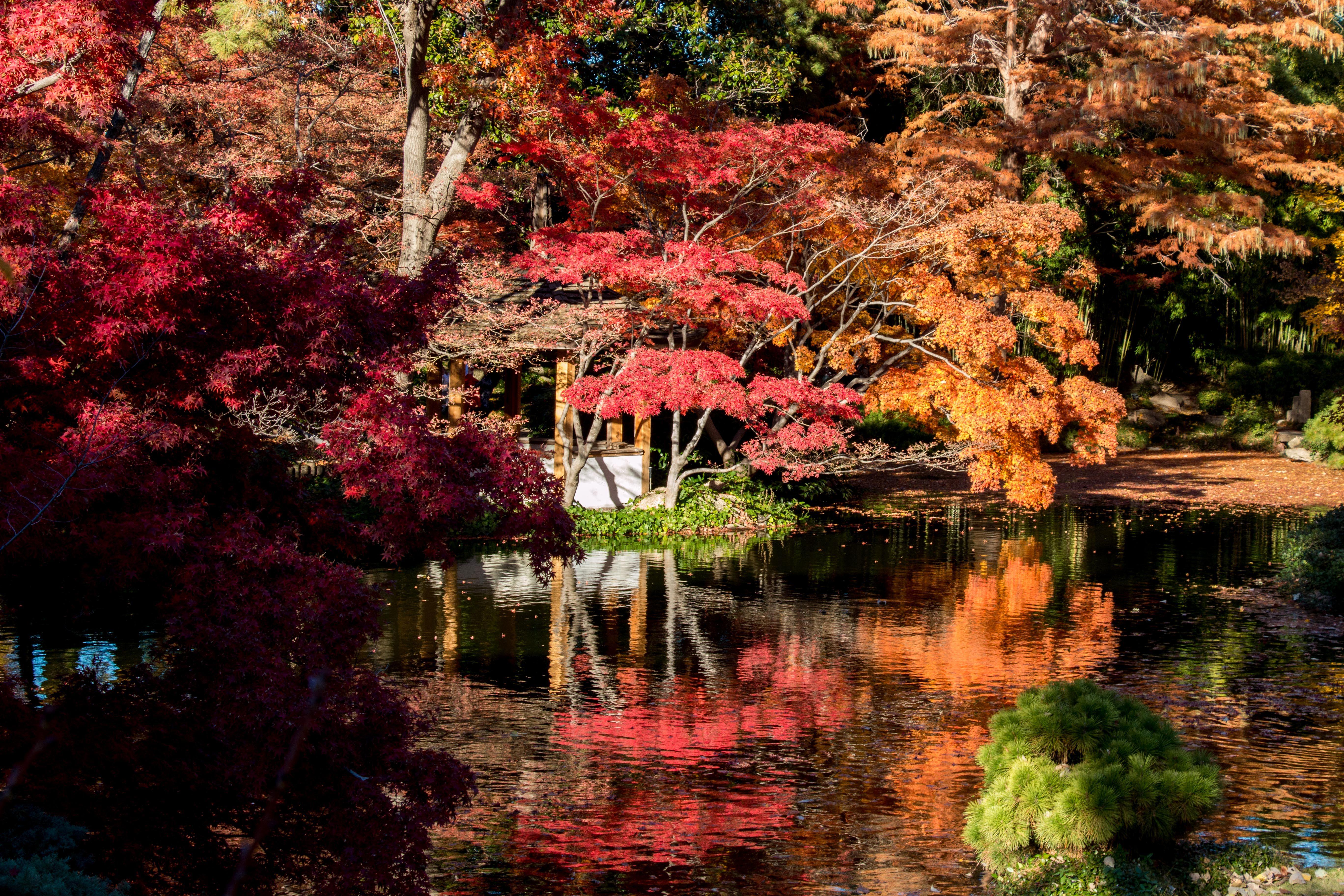 Japanese Gardens. Fort Worth, TX. Photo by Don Beene | Garten: Japan ...