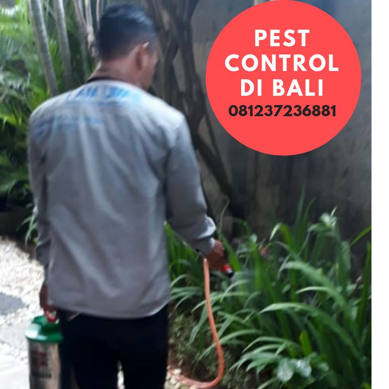 WA   081237236881 Jasa Pembasmi Tikus di Jakarta Kami menyediakan jasa  lainnya seperti jasa pembasmi kutu bedab1abe3