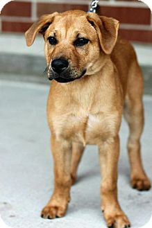 Because you need a dog named Peeta. Please adopt this wonderful puppy! Garner, NC.