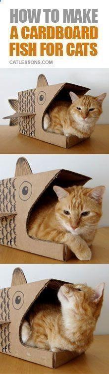 Comment faire une belle boite en carton pour chat !