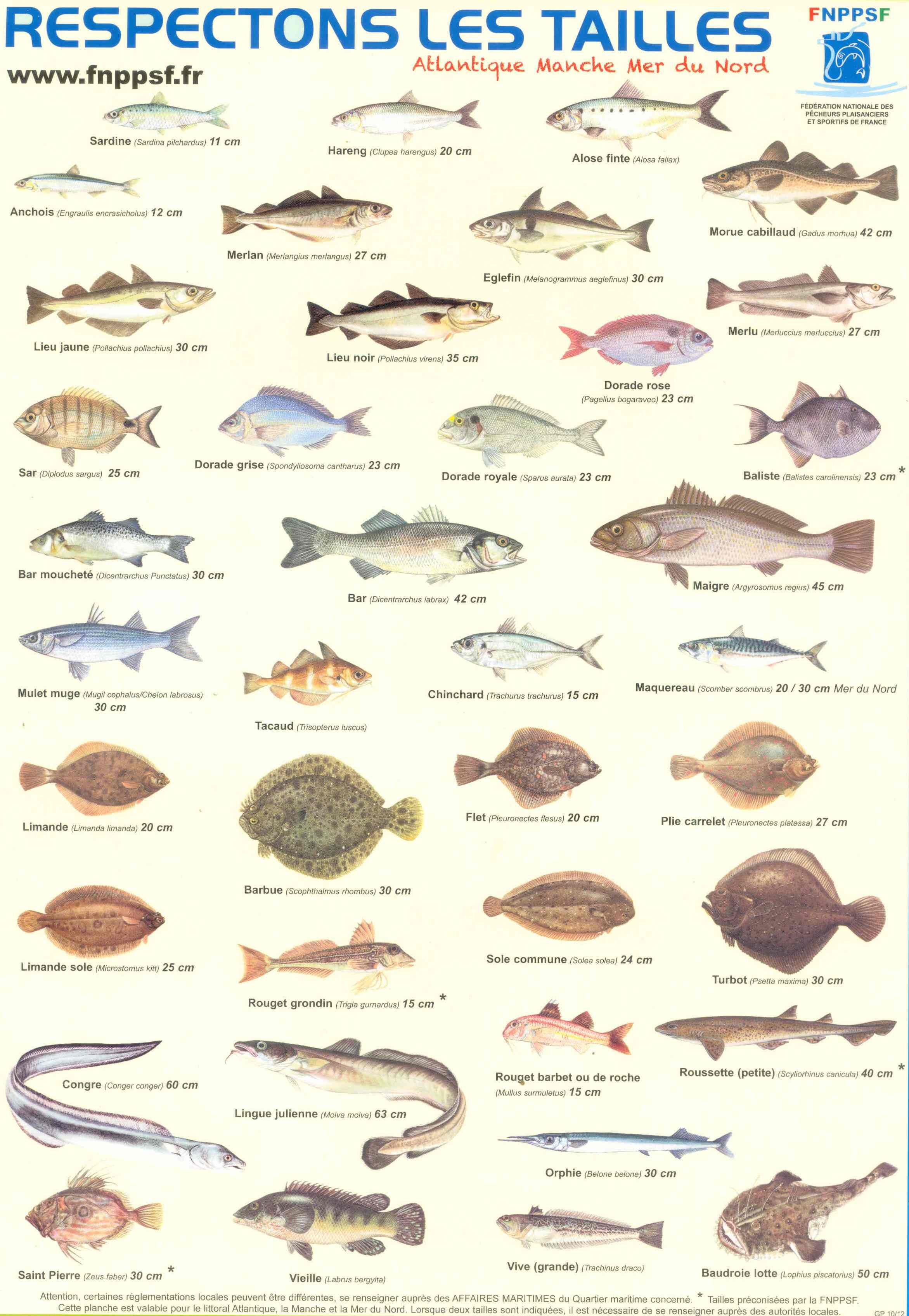 Afficher l 39 image d 39 origine peche poissons pinterest poissons p che et images - Grand poisson de mer ...
