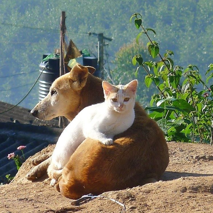 Dogs you've never seen in 2020 Rare cat breeds, Animals