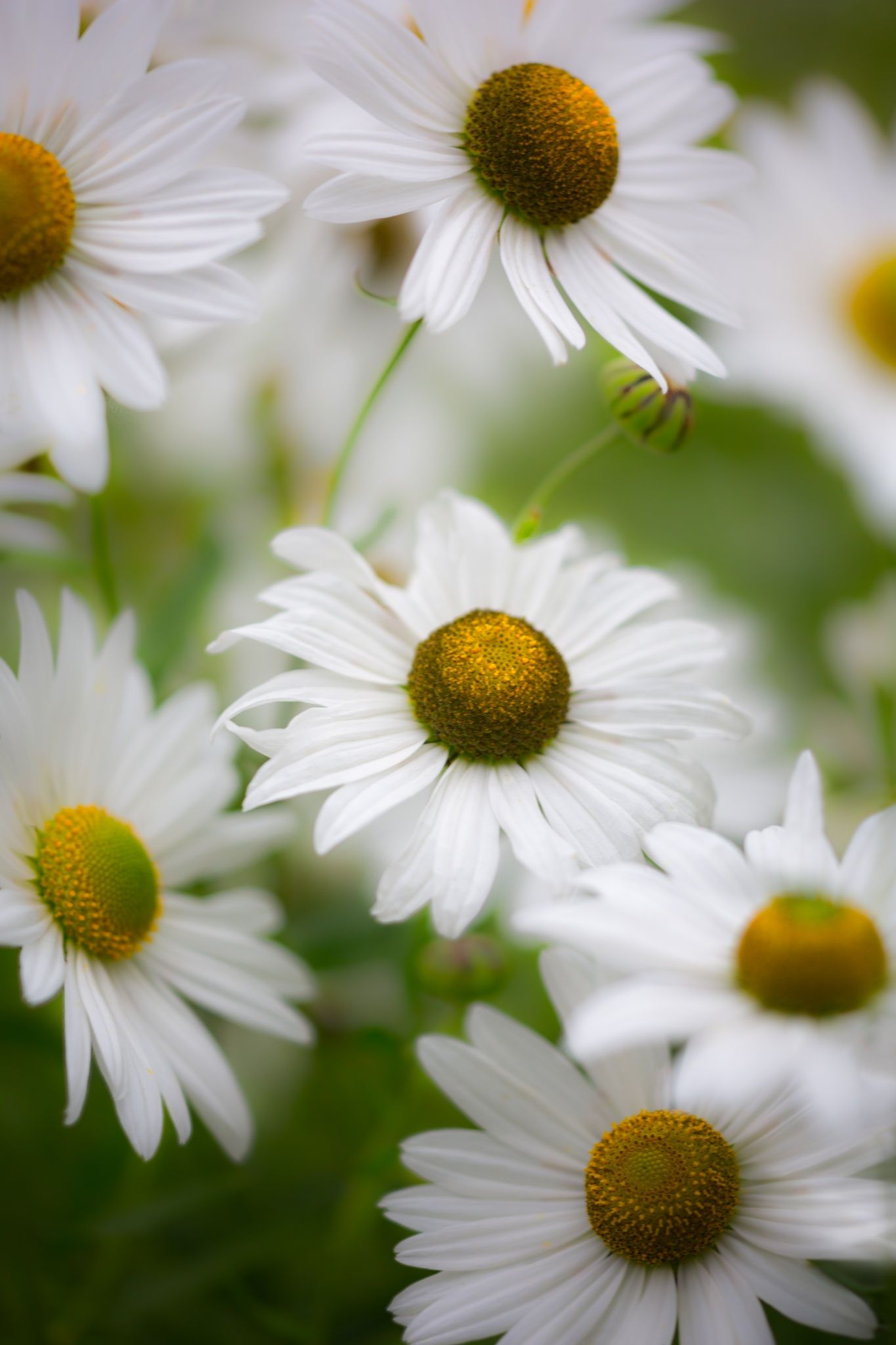 Margaritas by Marco Fischer on 500px | my feelings | Pinterest ...