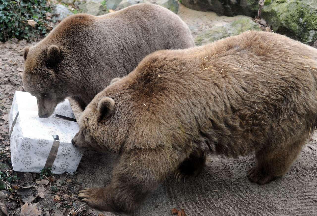 Animales reciben paquetes llenos de comida o golosinas y envueltos como un regalo de Navidad en el zoológico de La Flèche, Francia, el 23 de diciembre de 2013.  (AFP / JEAN-FRANCOIS MONIER)