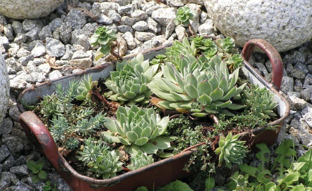 Shabby Chic Für Den Garten deko ideen shabby chic für den garten garden projects and gardens