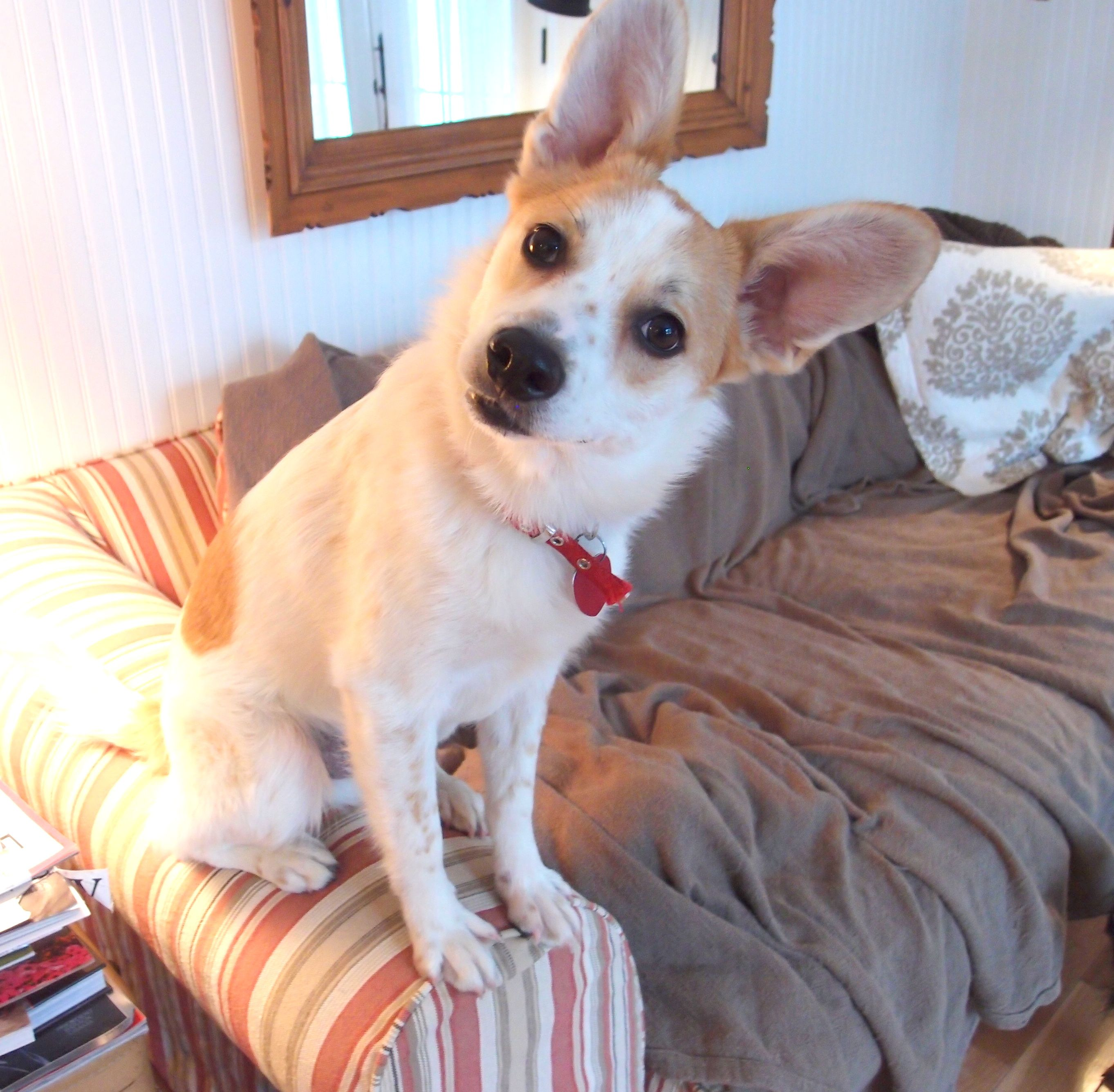 Bingo needs a home as of 2/27/12. He's in the Chicago