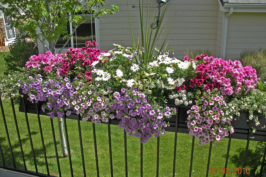 Deck railing plantings railing flower boxes planter
